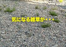 防草シート1