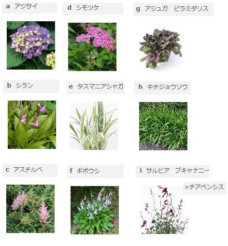 宿根草ガーデンセット
