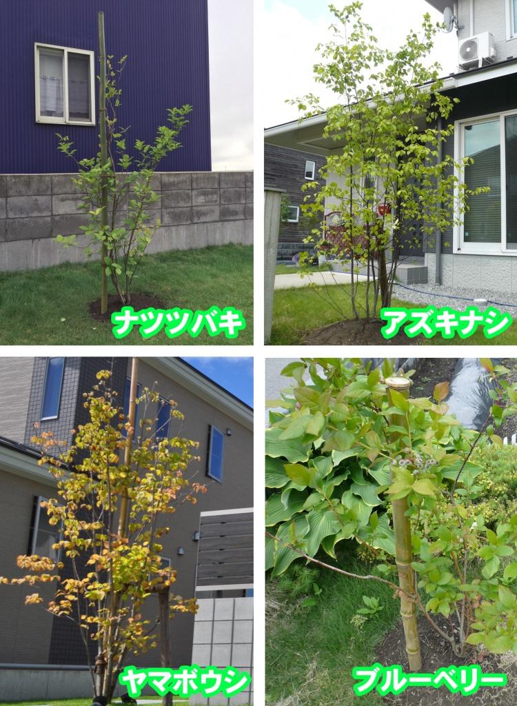 シンボルツリー1